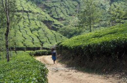 A Six Week Itinerary to South India - Feature Image, Munnar - Girls vs Globe