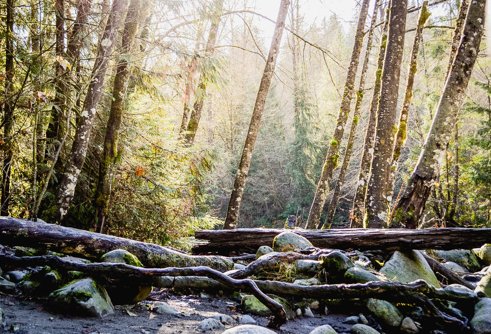 Rays of sunshine and leaning woods at Lynn Canyon Park Vancouver
