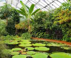 The enchanting, botanical beauty of the Royal Botanic Garden Edinburgh.