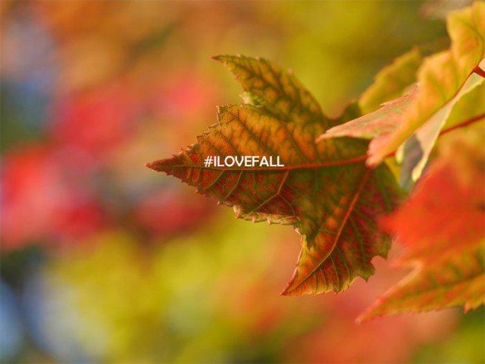 ilovefall