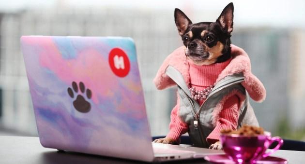 AAA cercasi animali domestici viaggiatori per creare una squadra di critici d'albergo