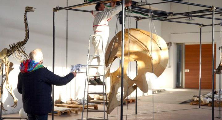 L'enorme triceratopo Big John in ricostruzione a Trieste