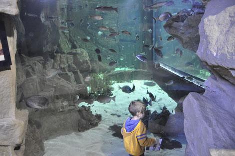 acquario di Livorno - vasca dei pesci