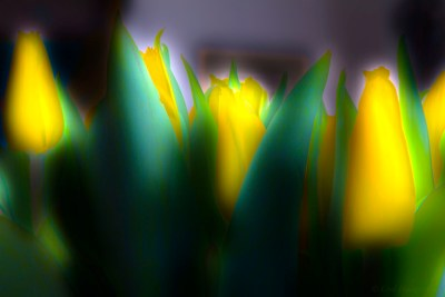 Easter Tulips (HDR Xtreme)