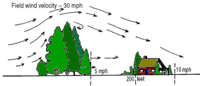 Image from Windbreaktrees.com