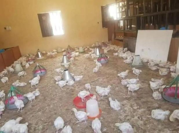 IMG 20200716 165056 072 - Faculty Turned To poultry farm In Borno State (Pictures)