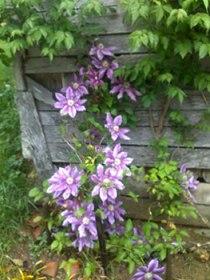 Un jardin arboré et fleuri