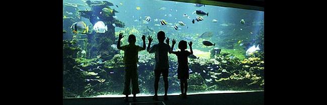 Que Visiter Nausicaa Aquaruim Boulogne Sur Mer