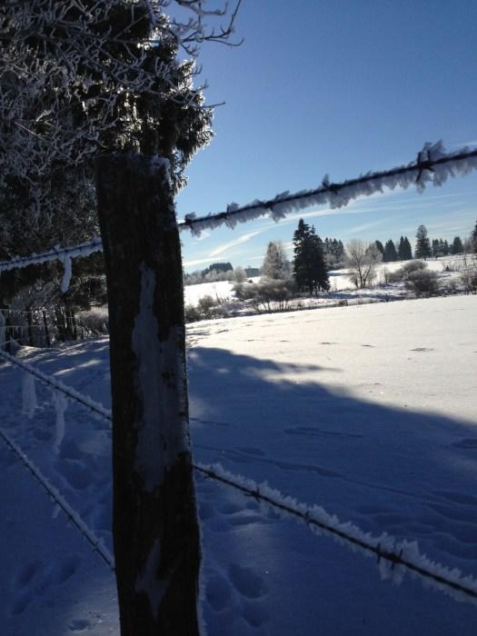 fagnes neige hiver(8)