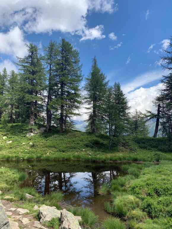 alberi che si riflettono su un piccolo stagno