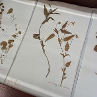 erbario-orto-botanico-2