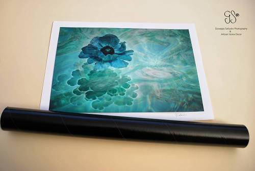Anemone - Photography & Prints