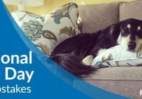 La-Z-Boy National Dog Day Sweepstakes