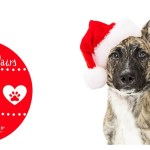 Deck The Paws Holiday Giveaway