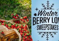 Farm Star Living Winter Berry Love Sweepstakes