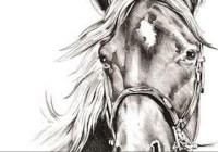 KATU WA State Horse Expo Ticket Giveaway