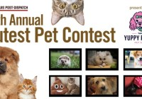 St. Louis Post-Dispatch 11th Annual Cutest Pets Contest