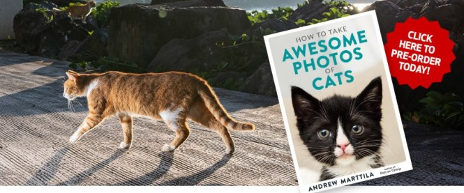How To Take Awesome Photos Of Cats Sweepstakes