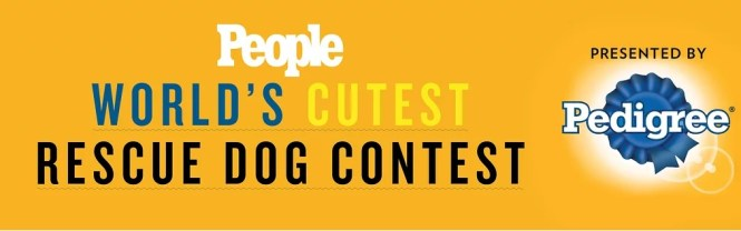 People Worlds Cutest Rescue Dog Contest