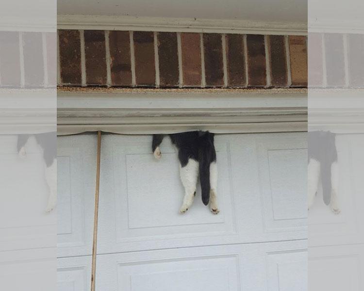 cat-garage.jpg