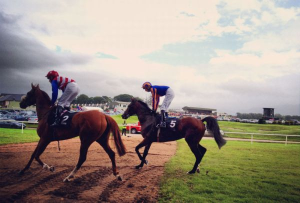 """""""Press"""" at a horserace in Killarney, Ireland"""