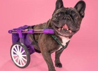 FiGo, la silla de ruedas para perros que cualquiera puede hacer con una impresora 3D