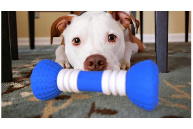 Con GoBone puedes jugar con tus mascotas en verano