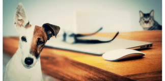 Gadgets para tus mascotas en verano