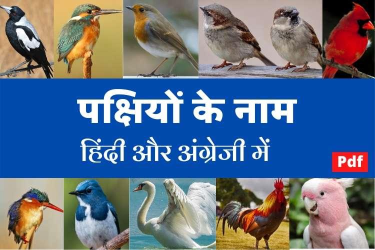 पक्षियों के नाम हिंदी और अंग्रेजी में - Birds Names in Hindi and English