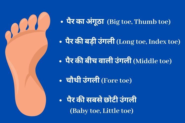 पैरों की उंगलियों का नाम - Foot fingers name in Hindi