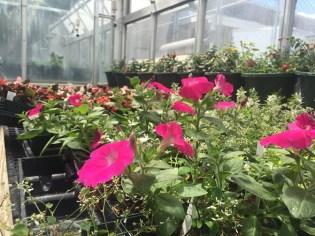 news-plant-sale-8