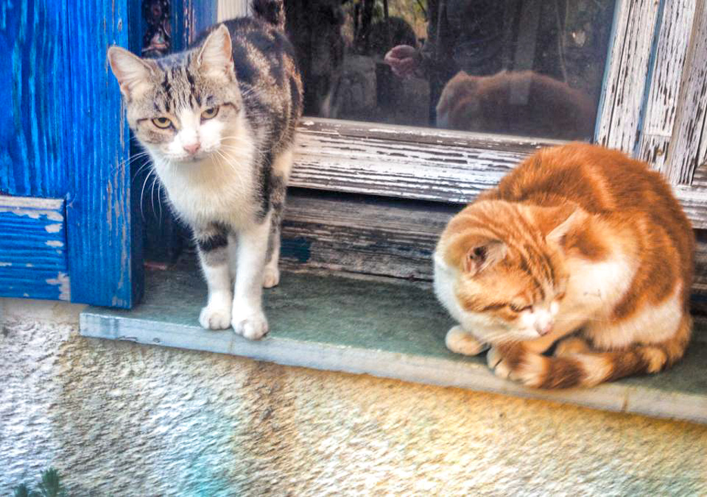 Greek farm cats on a WWOOF farm