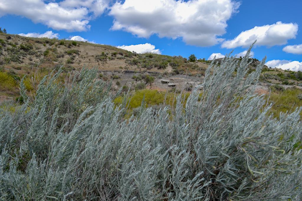 Sage brush in the North Dakota Badlands