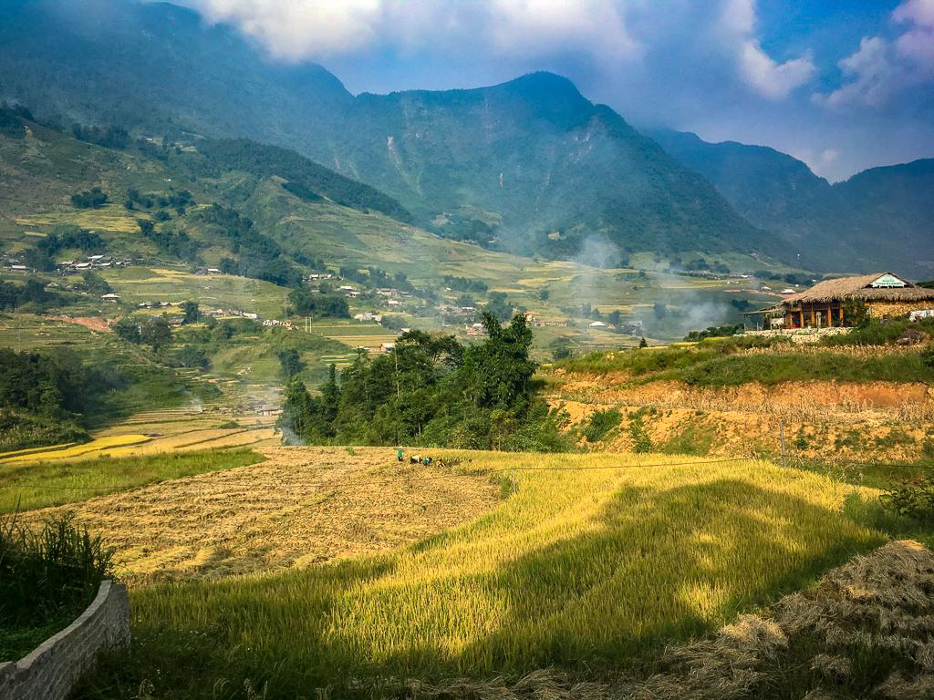 Beautiful golden rice paddies around Sa Pa, in Northern Vietnam