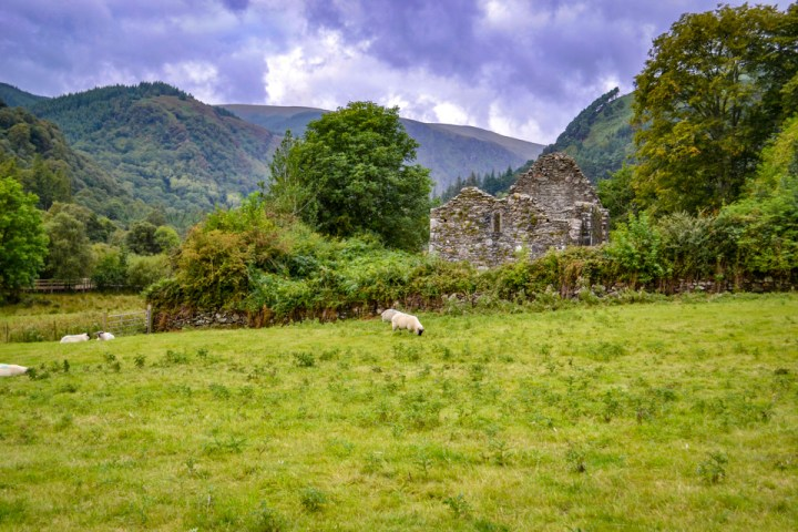 Wicklow Mountains National Park sheep and ruins, Ireland