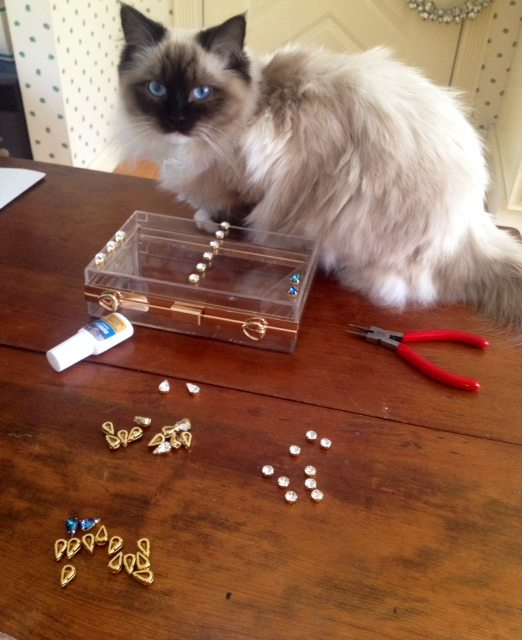 Kitty & Supplies