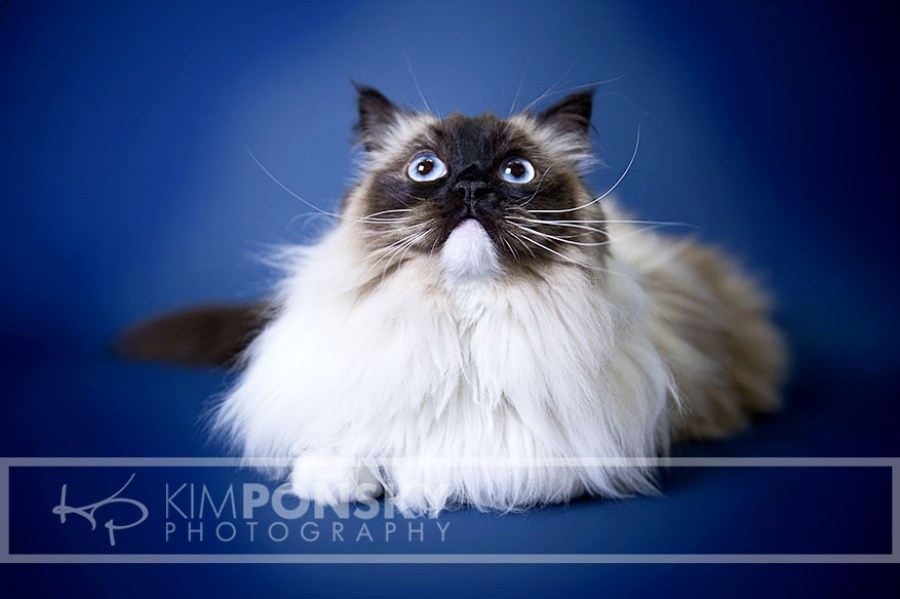 Why You Should Get Your Pet Photographed Professionally