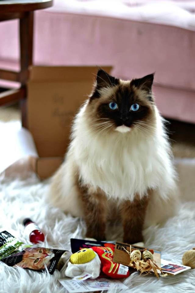 Spoil Your Kitty With A Cat Subscription Box Glamkaren Com