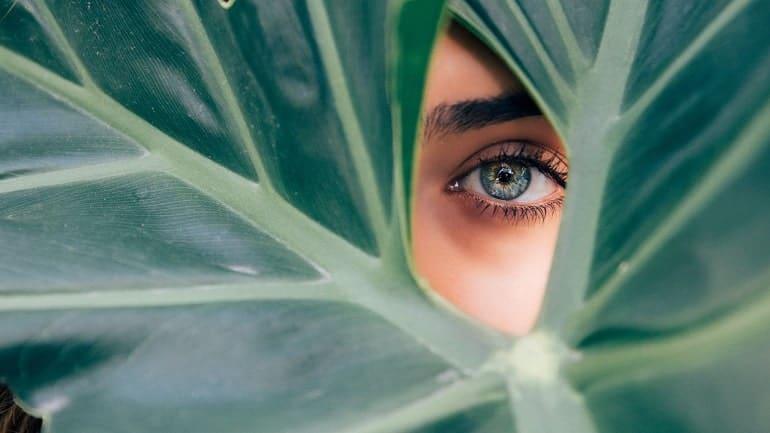 Eyeliner Pflanze
