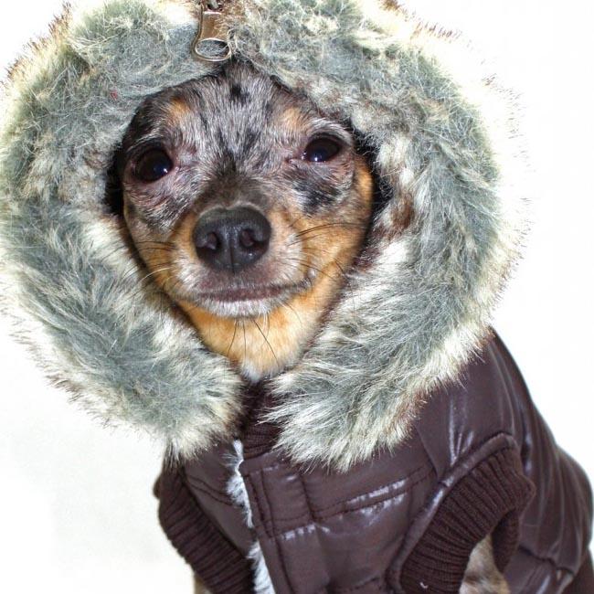Faux Fur Puffer Dog Coat Brown Designer Dog Clothes At