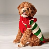 Christmas Elf Dog Sweater by Chilly Dog at GlamourMutt.com