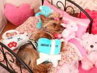 Sniffany & Co Dog Toy | Designer Puppy Boutique at ...