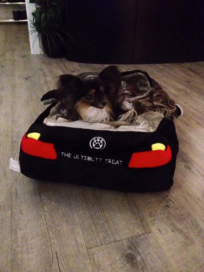 DMW Sports Car Dog Bed  Designer Puppy Boutique at Glamourmuttcom