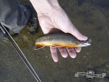 Natasha catching a brook trout, Cottonwood Creek, Collegiate Peaks.