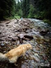 Daisy enjoying the hike and creek.