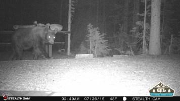 1. Bear walking through our site.