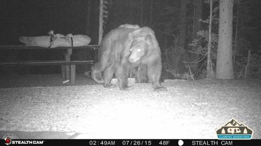 4. Bear walking through our site.