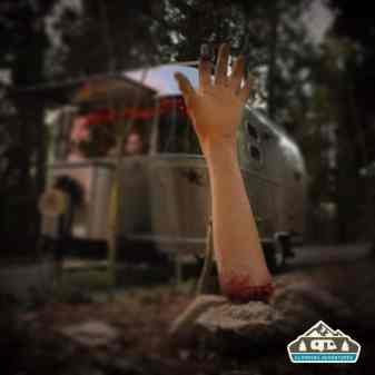 Something coming up from the underground. Revered's Ridge Campground, CO.