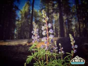 Wild flowers. Baby Doe C.G. Leadville, CO.