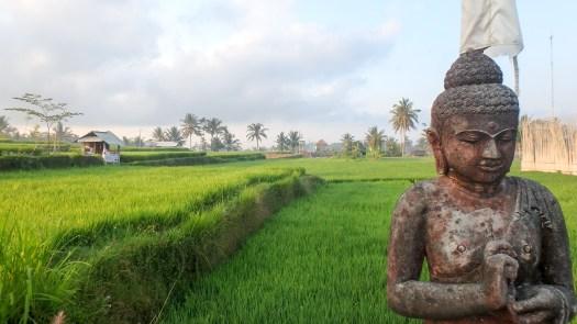 paddie-buddha